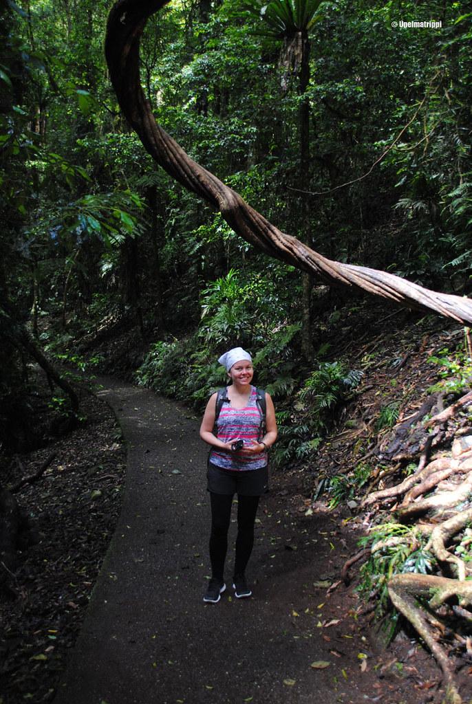 Jenni Dorrigon kansallispuistossa, Australiassa
