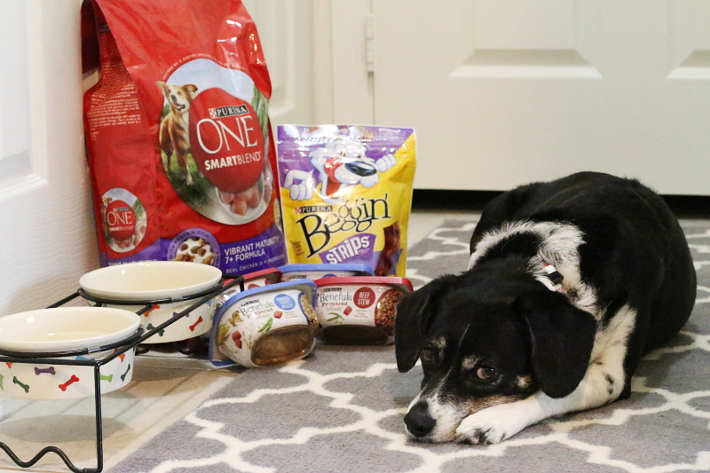 louis-beagle-purina-dog-food-6