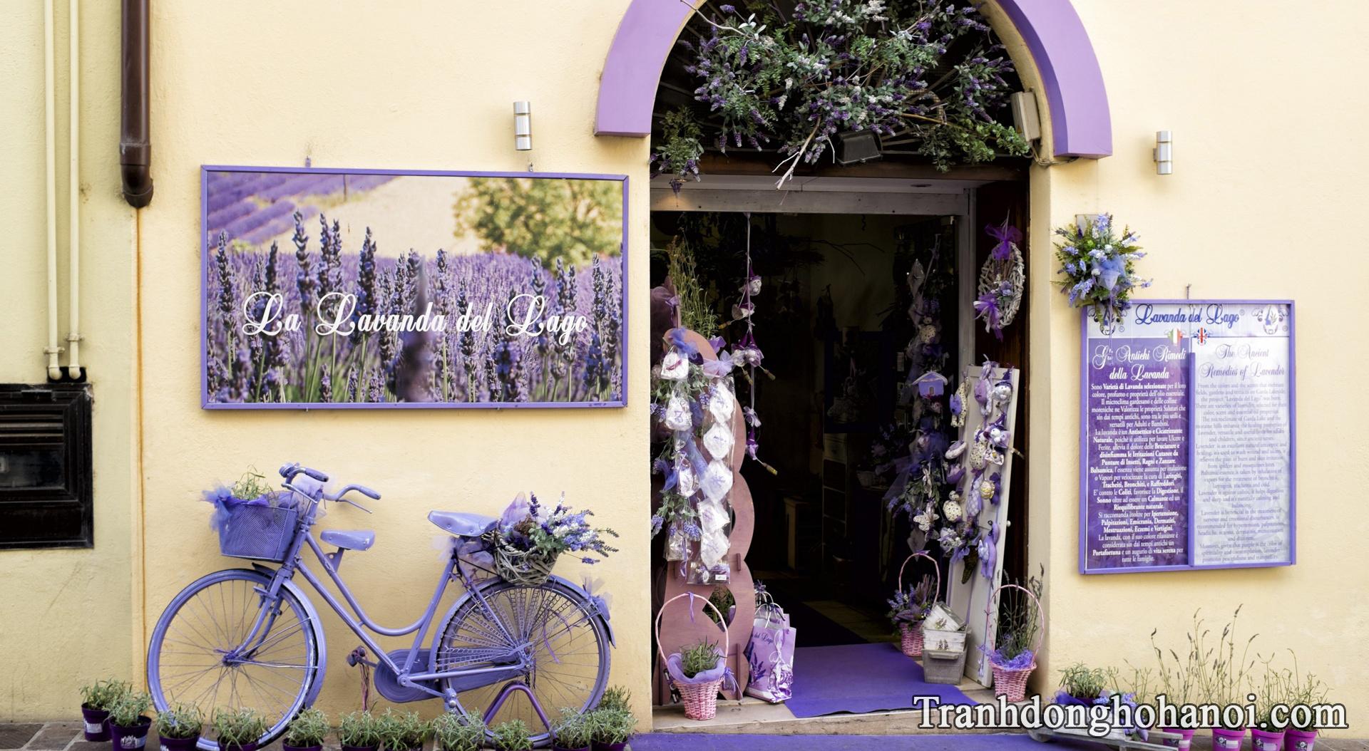Hinh anh cua hang ban hoa oai huong lavender o Phap