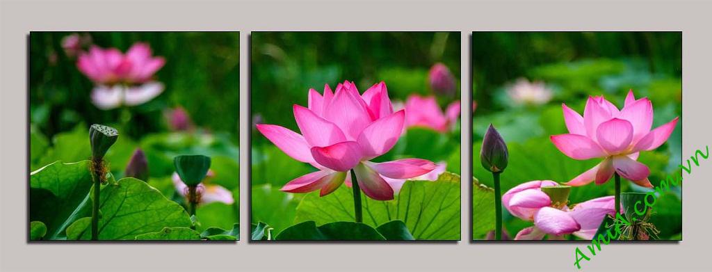 Hinh anh hoa sen dep lam mau tranh hoa sen ma AmiA 1125