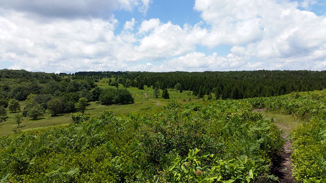 20170624_Dolly_Sods_054