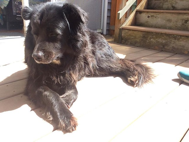 Bear Cub is catching some rays.
