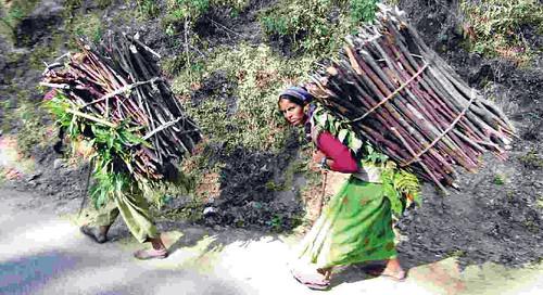 जंगल से लकड़ी ले जाती महिला