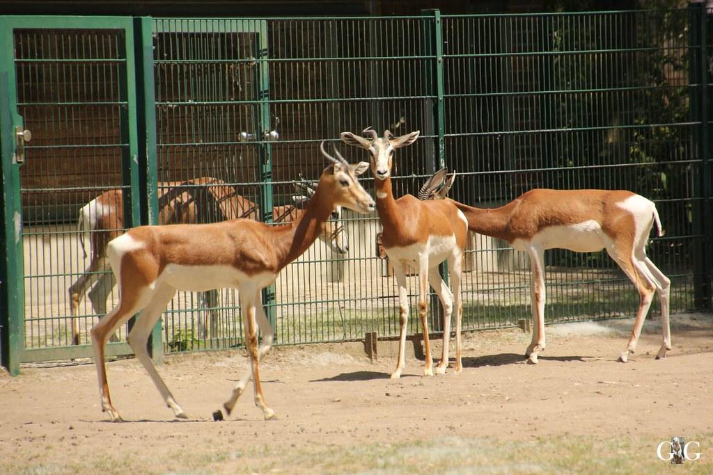 Tierpark Friedrichsfelde 28.05.1733