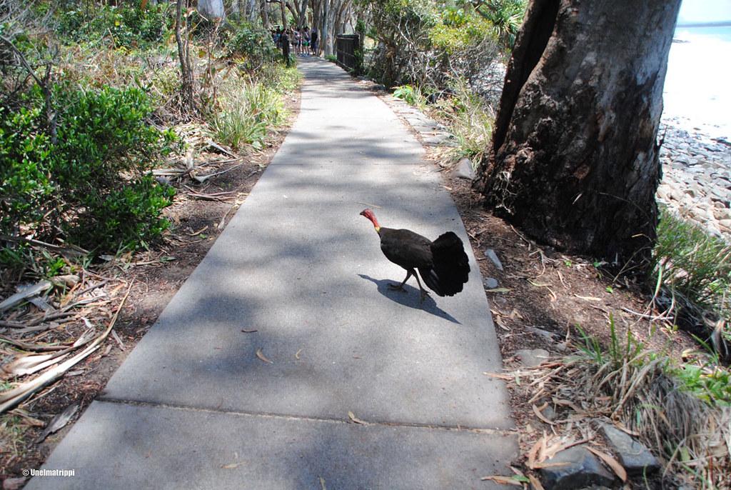Noosan kansallispuisto, Australia