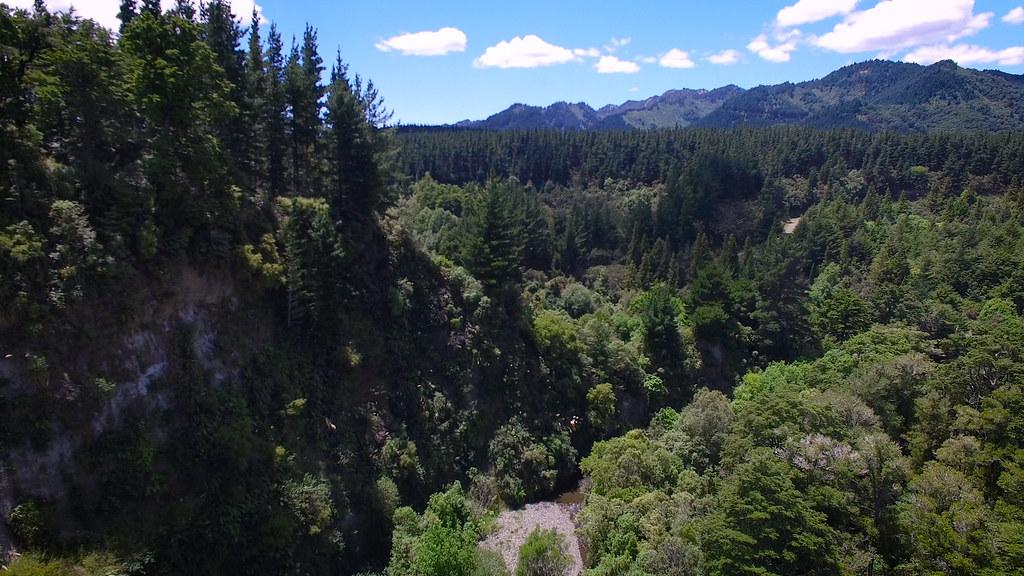 紐西蘭瓦希尼森林公園(Ruahine Forest Park)。圖片來源:Forest & Bird