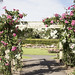 Places in Dublin Where you Can Stop and Smell the Roses