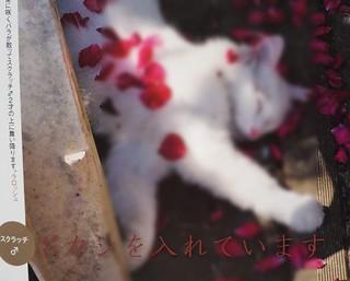 世界ネコ歩き 岩合さん 擬人化
