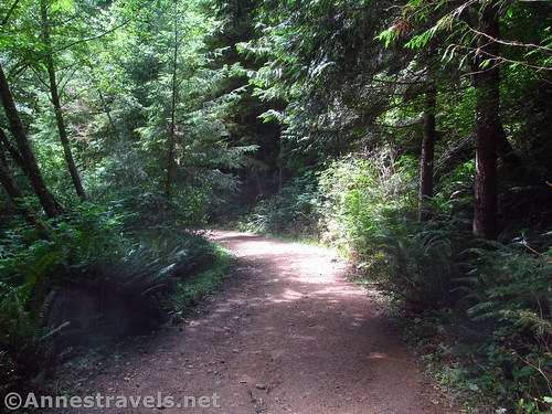 Road / trail through the rain forest on the Clatsop Loop Trail in Ecola State Park, Oregon