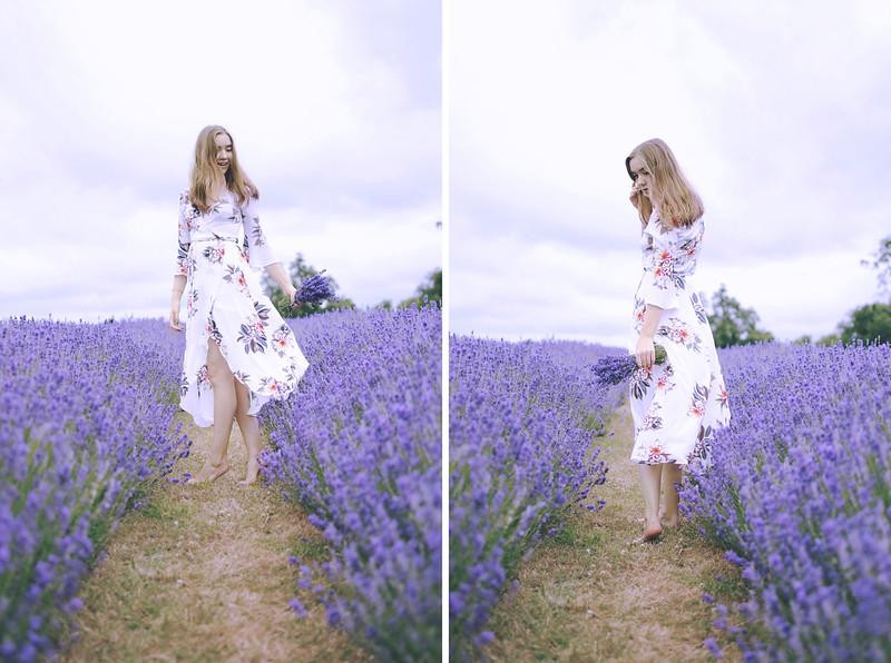lavender dreams 6