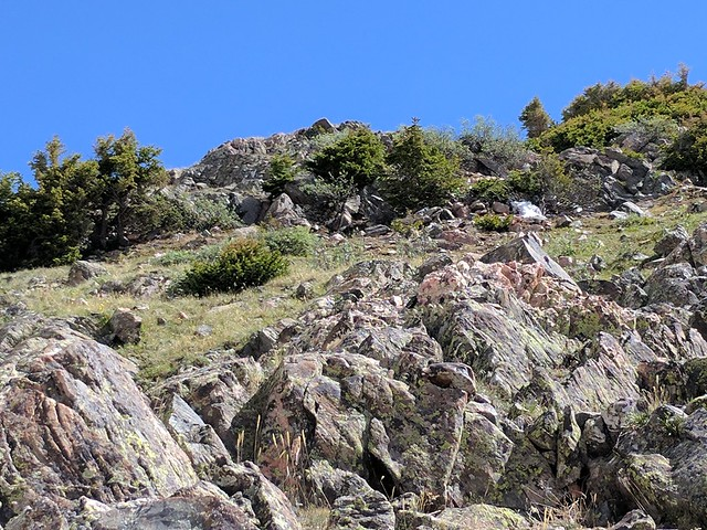 Can you spot the ptarmigan?