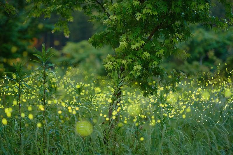 SHINE -初夏の光-