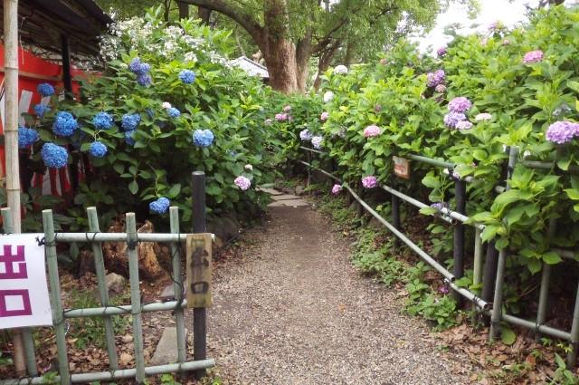 藤森神社の第一あじさい苑の出口