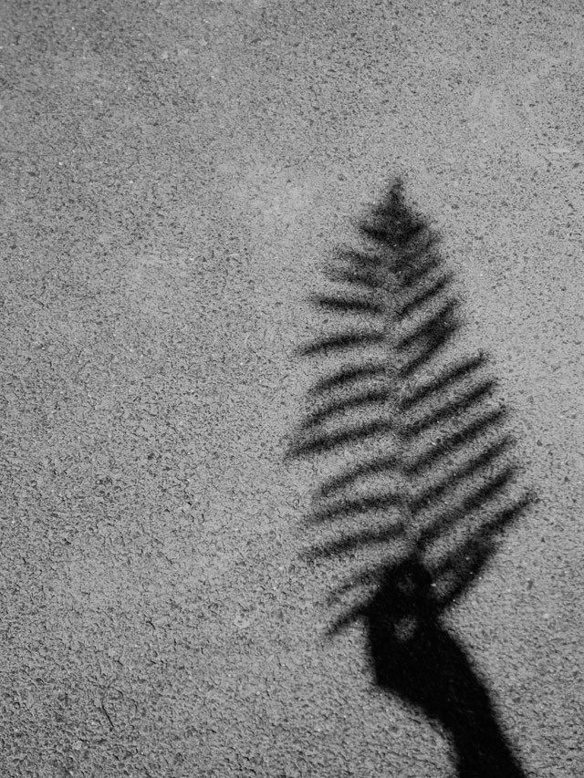 shadow of hand holding fern