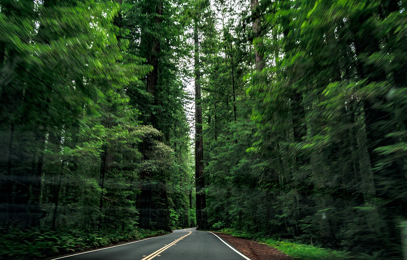 Avenida de los Gigantes - California State Route 254 - Avenue of the giants travel road trip