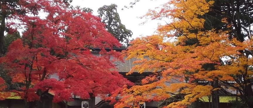 高野山の紅葉
