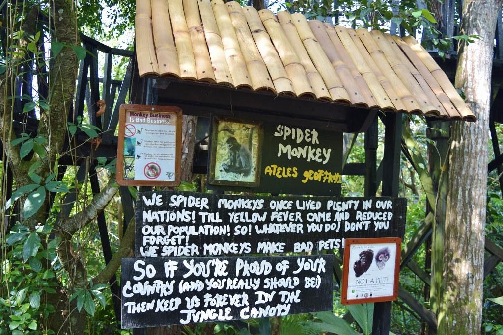 Belize Zoo - spider monkey enclosure