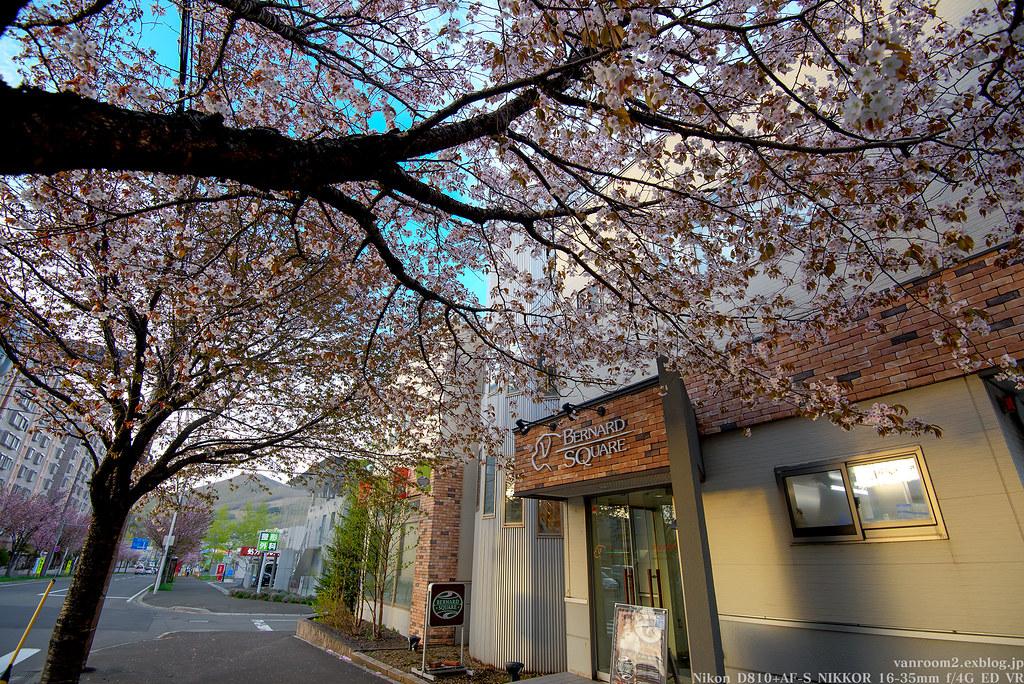 バナスク桜
