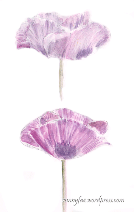 2 watercolour pink poppies