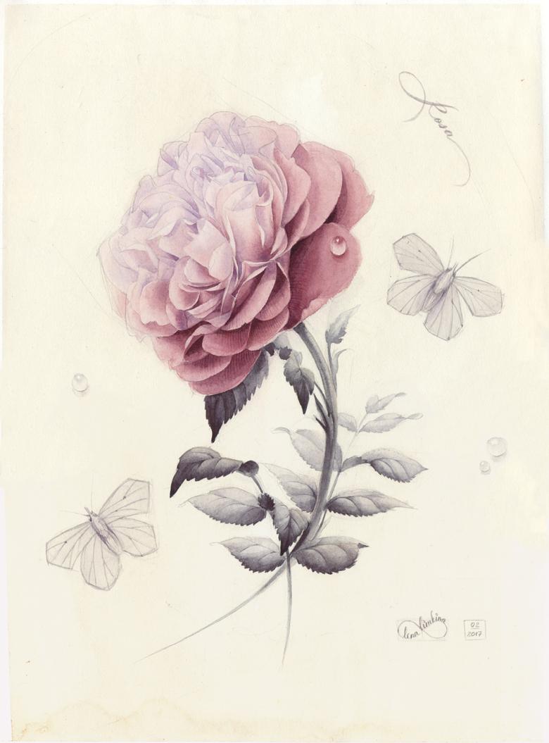 Rose_780