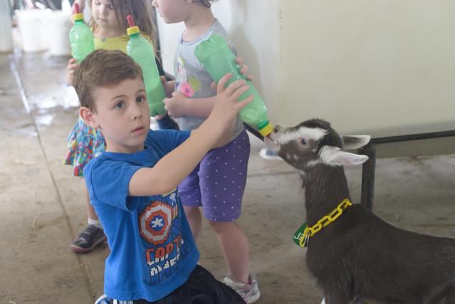 goat farm-39