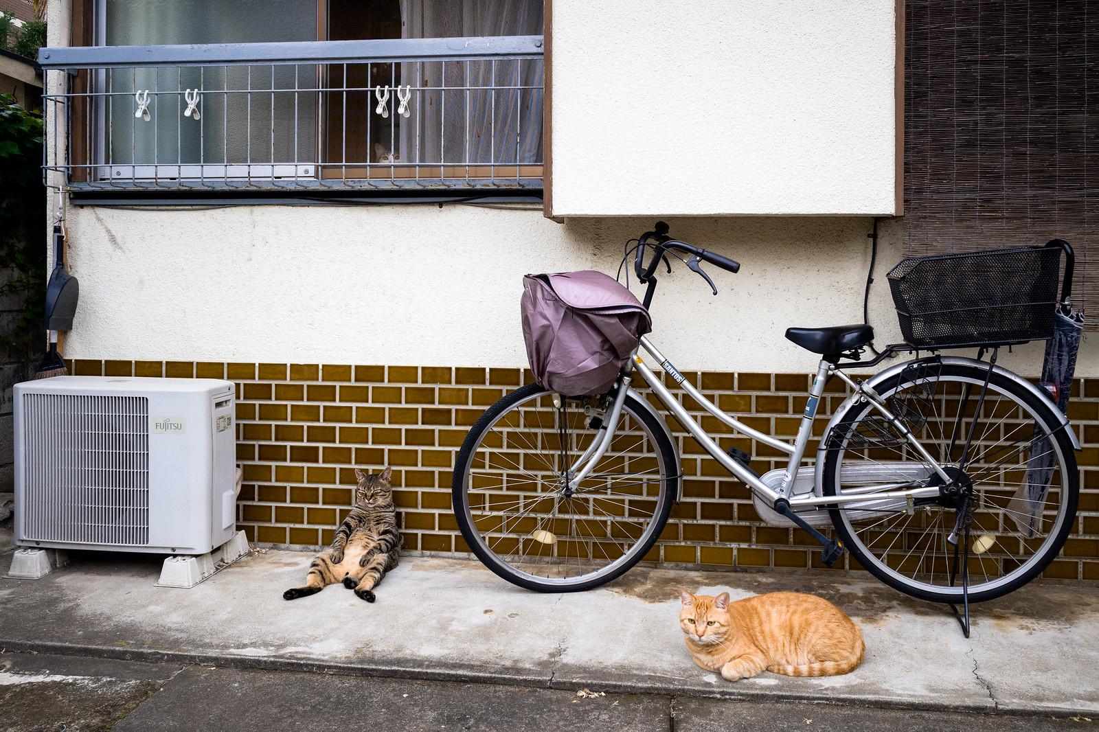 Nakano | by Dan Szpara