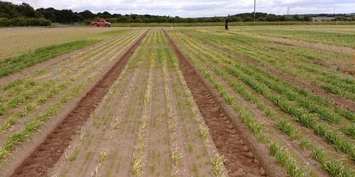 SCEPTREplus carrot weed trials