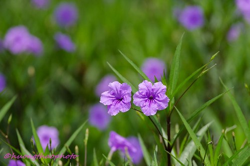Couple purple