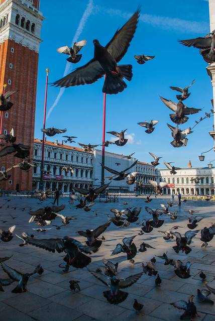 2017 06 - Venice-36.jpg