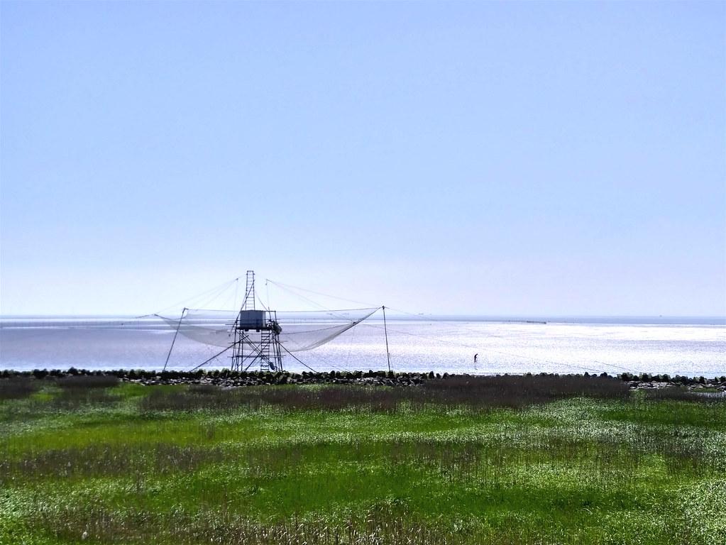 上海南匯東灘的濱海濕地。隨著沿海經濟開發,填海和圍墾使得濱海濕地急劇減少。圖片來源:張菁。