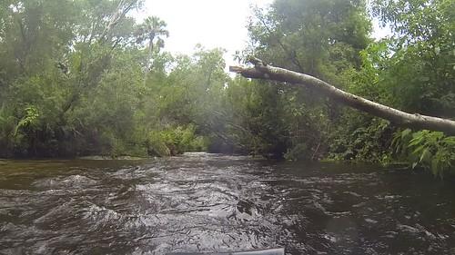 Juniper Springs Creek-010