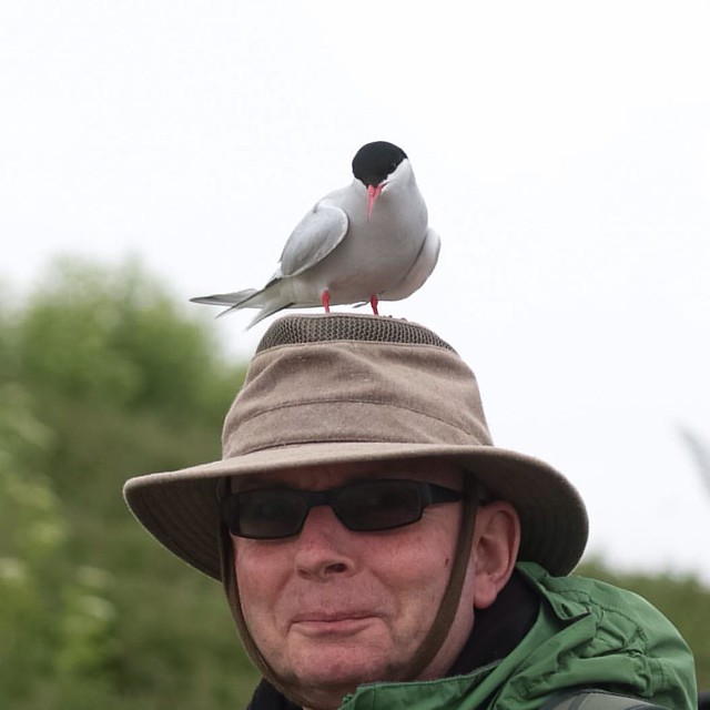 Man with an artic tern on his head #farneislands @abrinsky