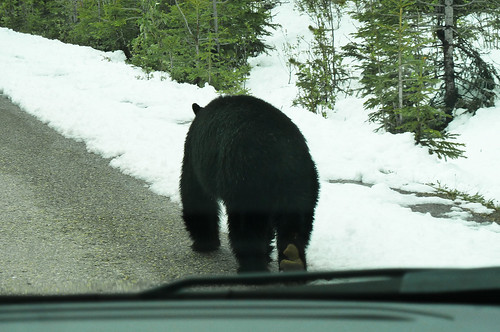 Bear Jasper Nationalpark Canada | by goandtravel