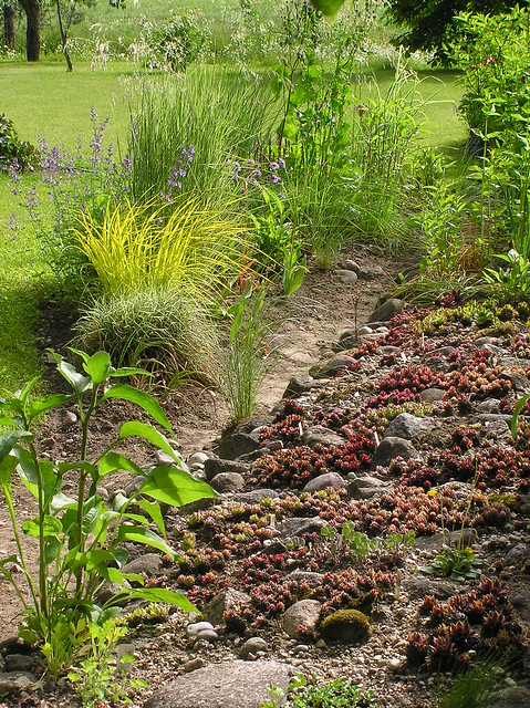 Sempervivums & grasses