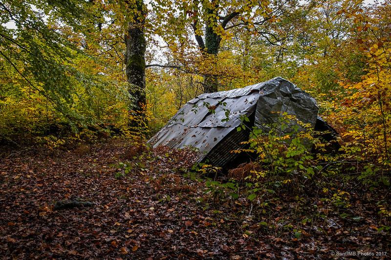 Cabaña en el bosque de los Robles Milenarios