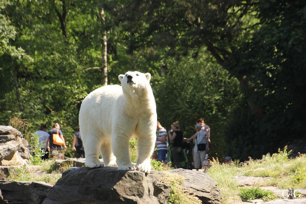 Tierpark Friedrichsfelde 11.06.1711