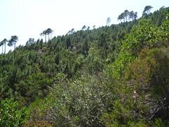 La crête de montée vers Pinetu Pianu : on la remonte par la droite