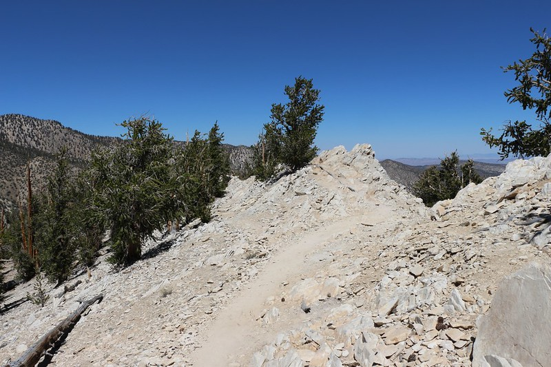 The Methuselah Trail travels over a Dolomite outcropping