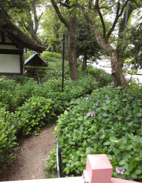 藤森神社の第二あじさい苑の欄干からの光景