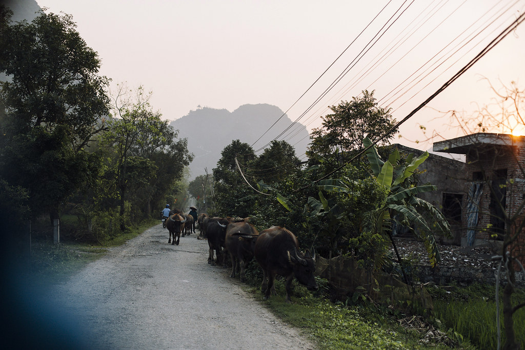 Tam_Coc_11, Ninh Binh and Tam Coc National Park, a Photo and Travel Diary by the Blog The Curly Head, Photography by Amelie Niederbuchner,