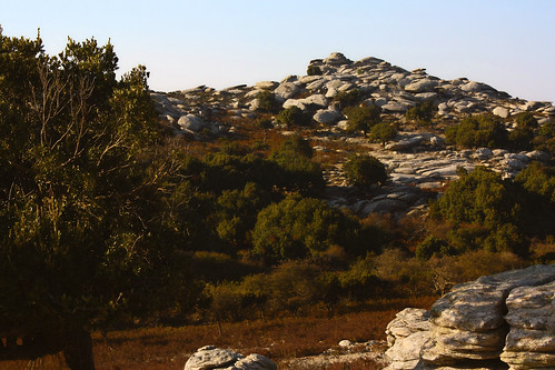 In view of forested uplands and piles of egg-shaped rocks