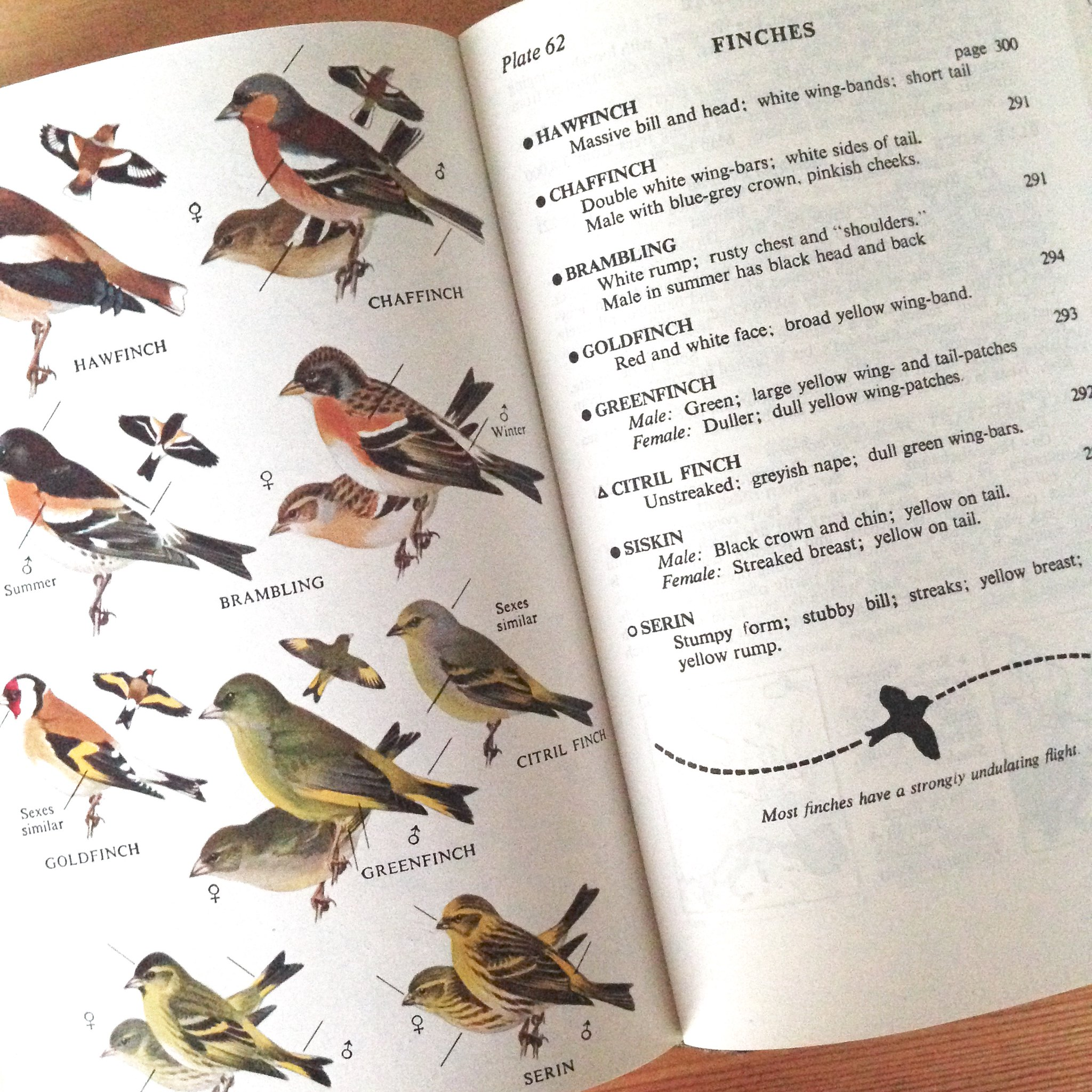 A page of finches