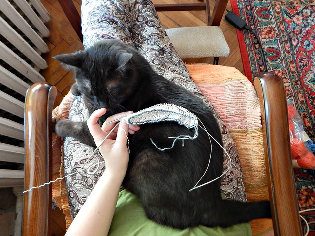 Белый свитер - образец и чёрный кот Муся | White cotton sweater and Musia the black cat
