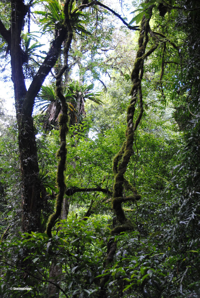 Dorrigon kansallispuisto, Australia