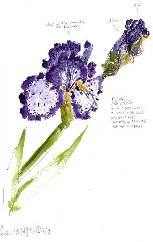 Sketchbook #104: Irises