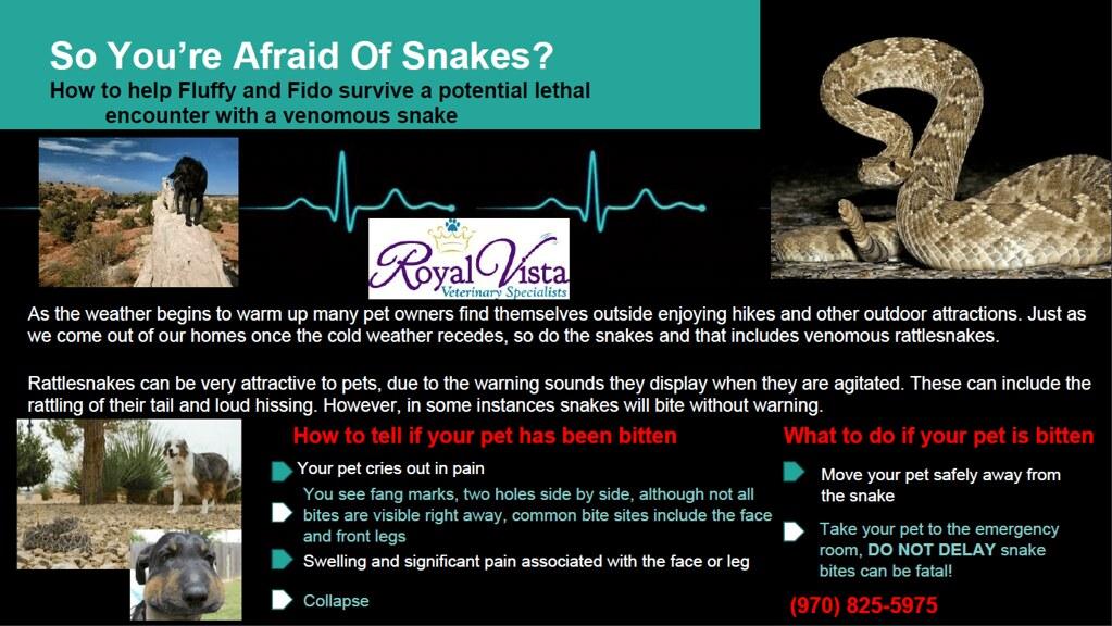 snake envenomation treatment