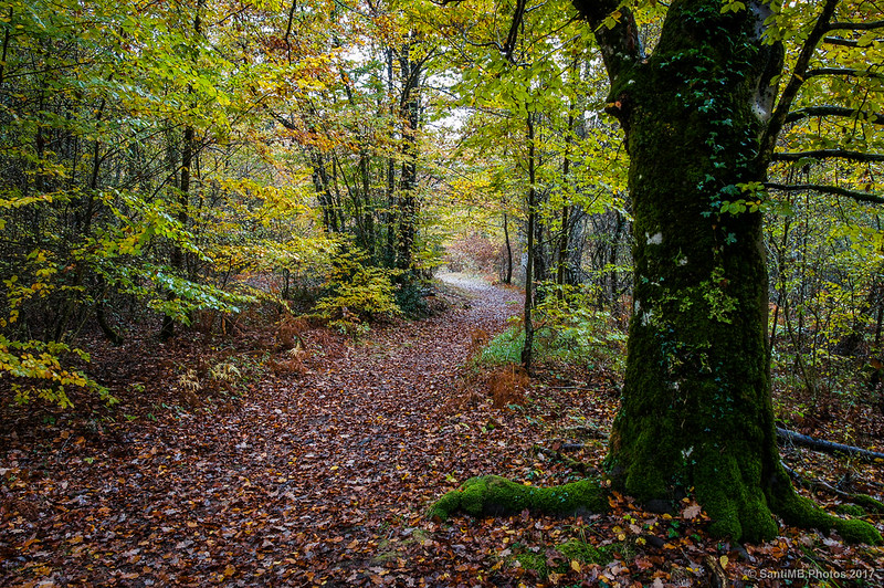 Sendero de los Bosques Milenarios