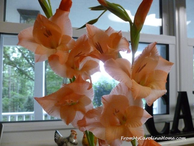 Apricot Gladiolas at From My Carolina Home
