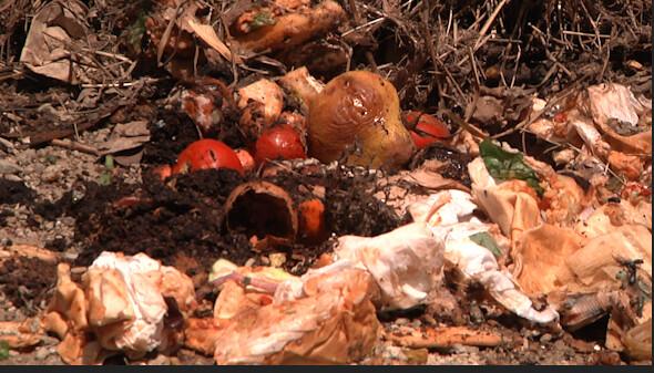 Compost Katie Enriches Lansing Community Gardens