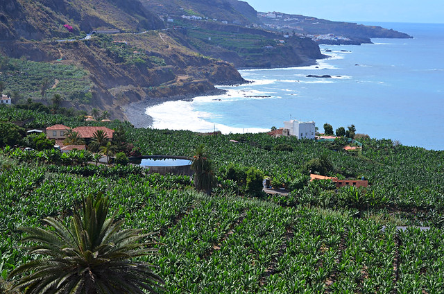 Banana plantation, north coast, Tenerife